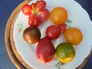 verschiedene Tomaten-Sorten auf einem Teller